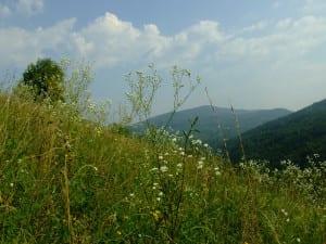 Летний отдых в Закарпатье