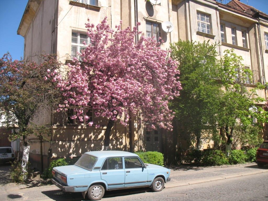 Отдых в Карпатах на майские