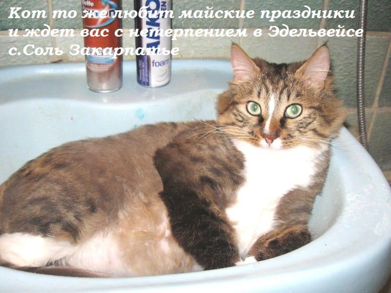 Кот ждет туристов на майские в Карпаты