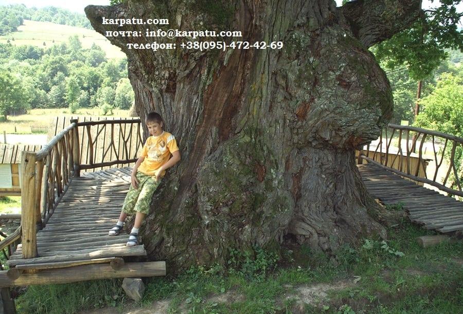 Интересные места в Карпатах и Закарпатье