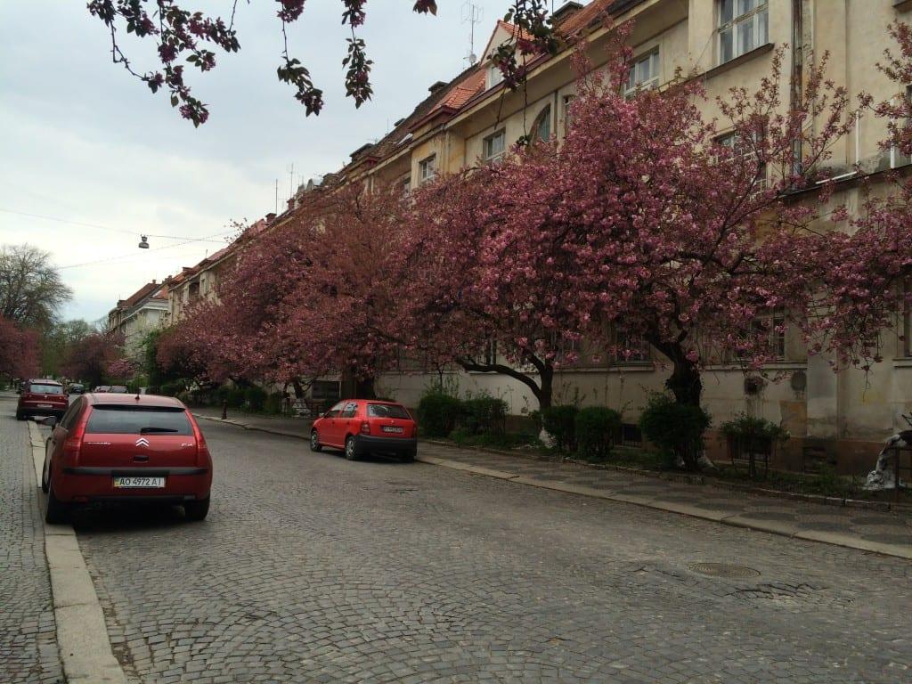 Путевки в Закарпатье весной