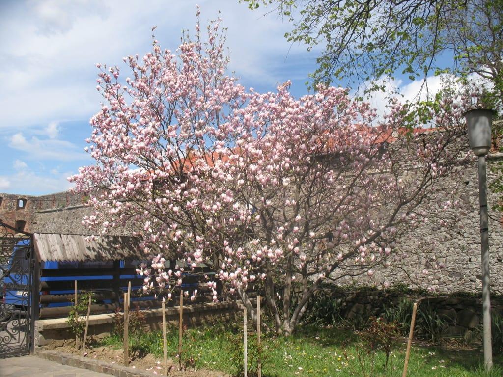 Туры в Закарпатье весной