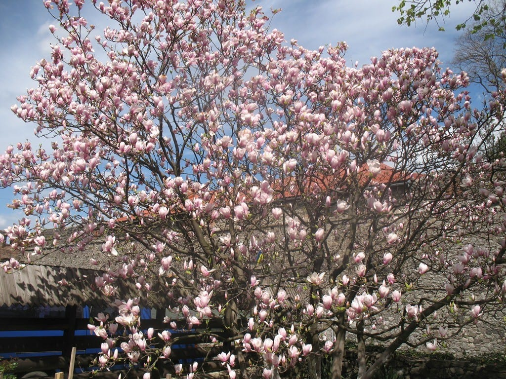 Отдых в Карпатах на майские праздники