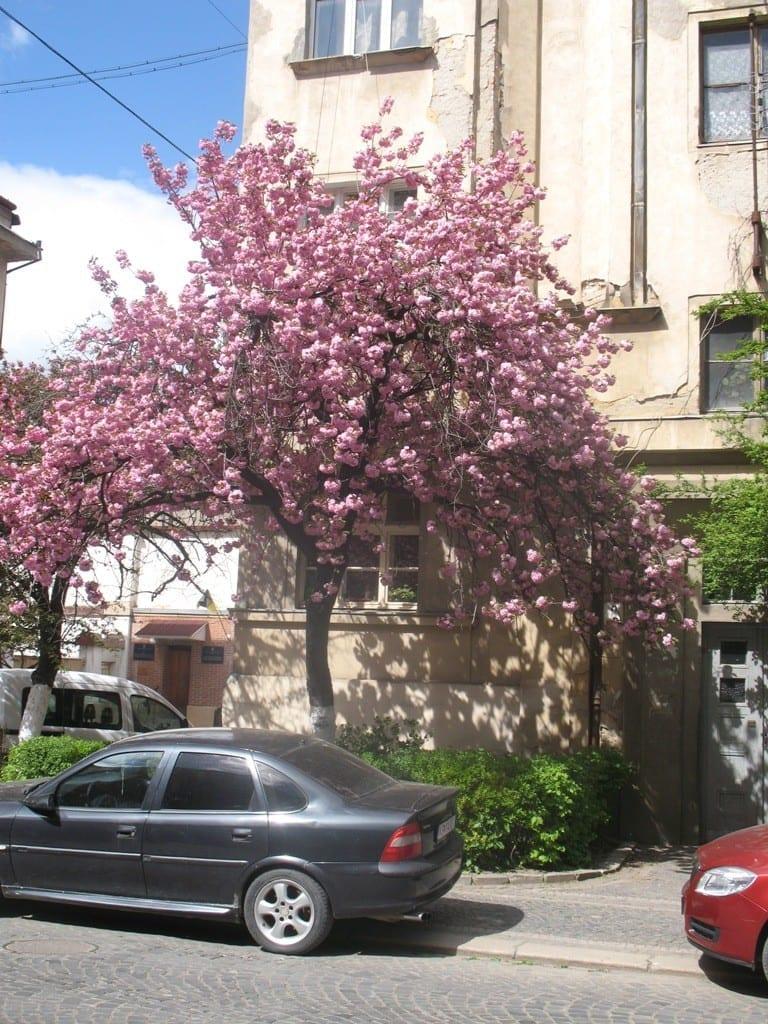 туры в Карпаты на майские