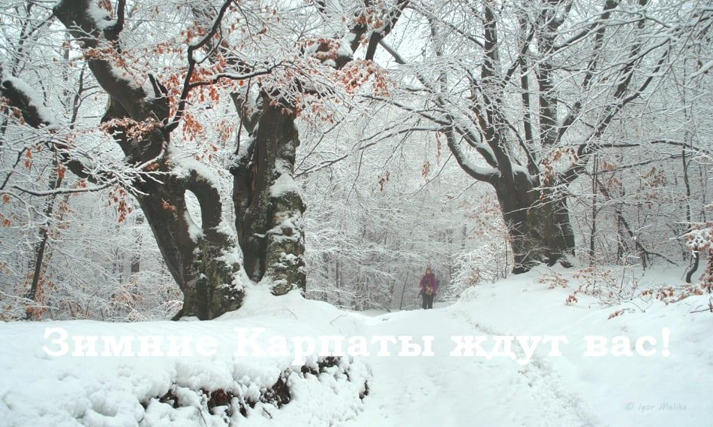 Отдых Закарпатье зима 2017