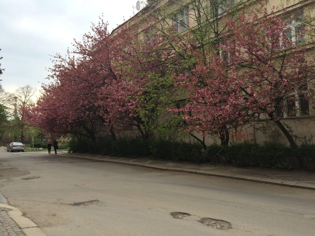 Туры в Карпаты весной