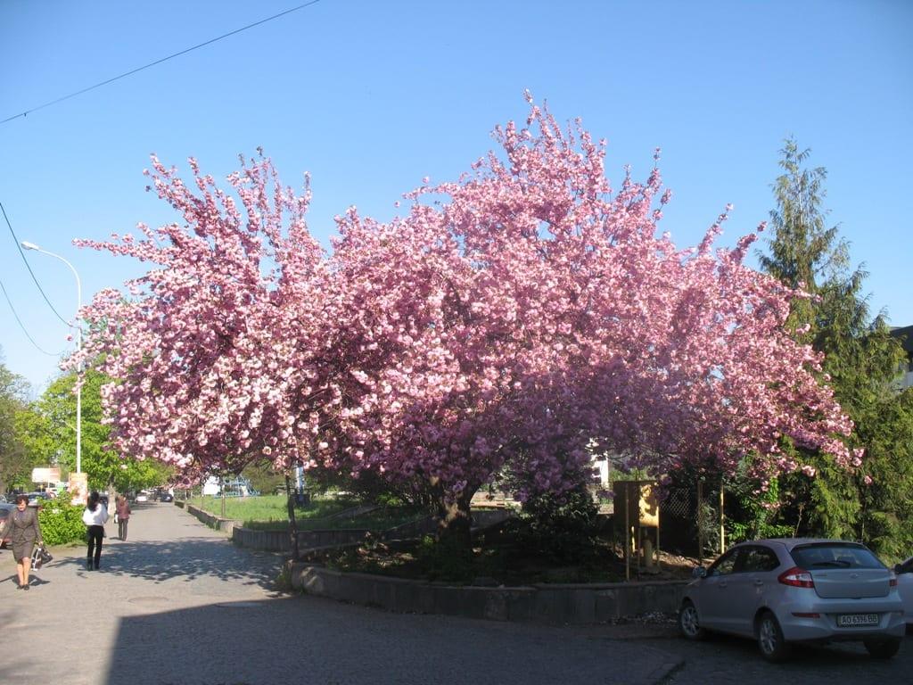 Отдых в Карпатах весной 2017