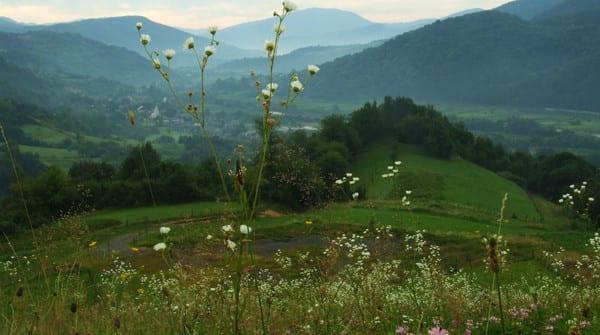 Отдых в Закарпатье в августе